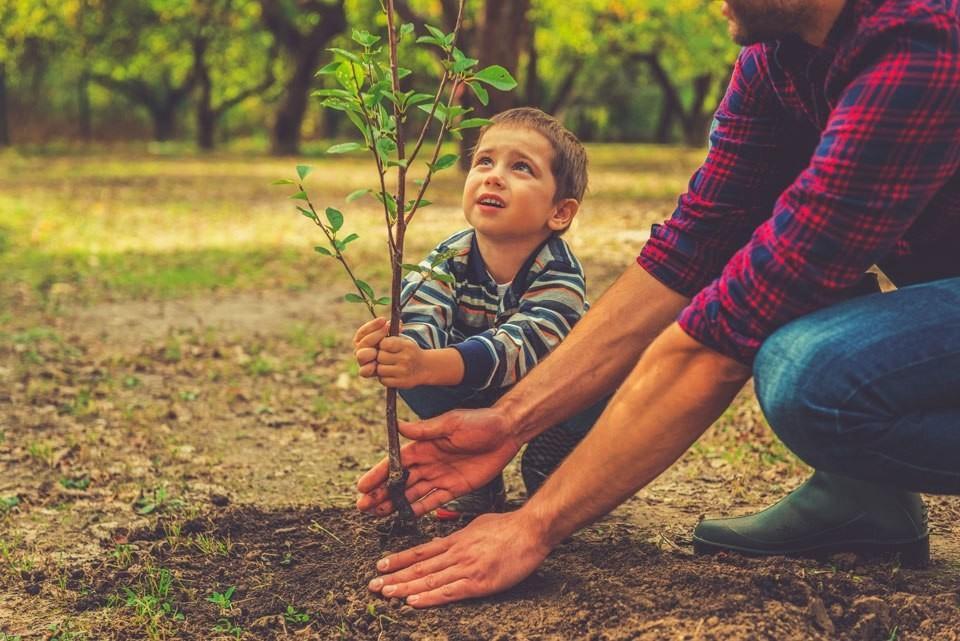 Как деревья и кусты могут сберечь психическое здоровье