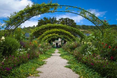 Как улучшить цветение декоративных растений