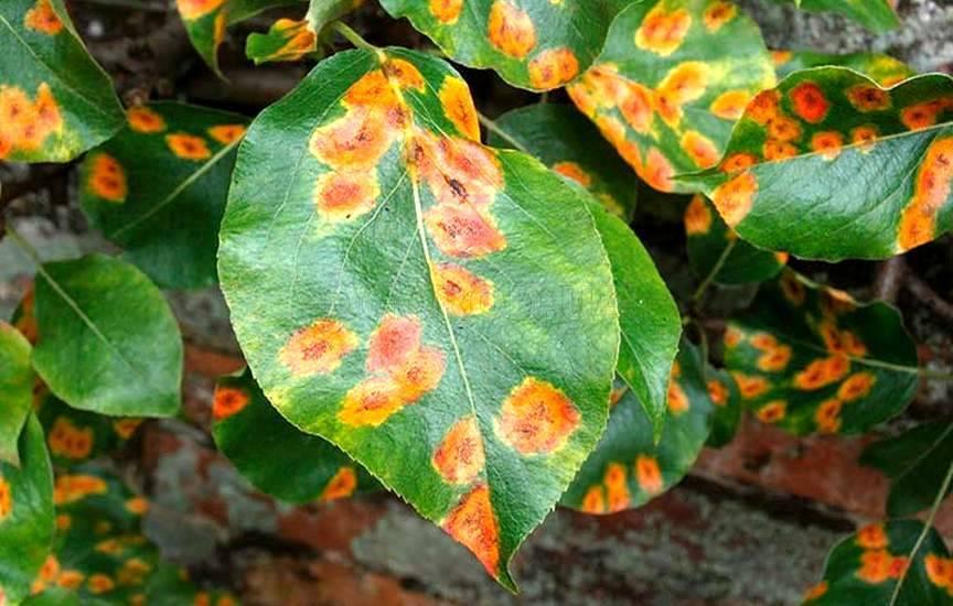 Распространенные болезни растений в летнее время и способы борьбы с ними